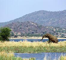 Elephants' Pool by Carisma