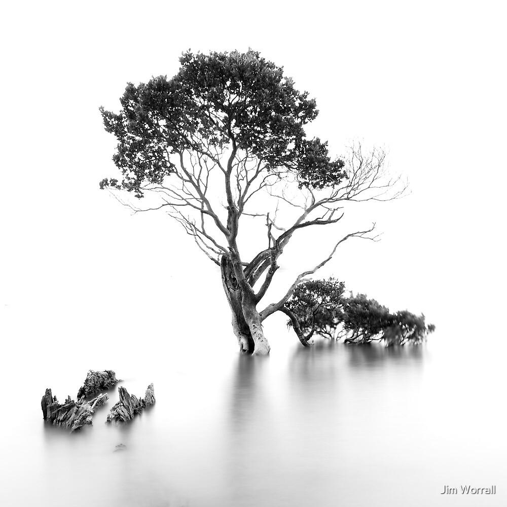 Sweet Survivor by Jim Worrall