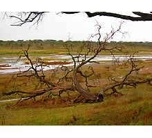 Fallen Tree- Marshes of Serengeti Photographic Print