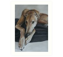 Bauregard Greyhound Art Print