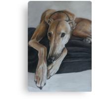 Bauregard Greyhound Canvas Print