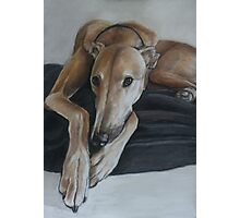 Bauregard Greyhound Photographic Print