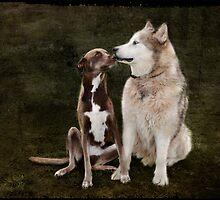Topaz & Bear by Linda Lees