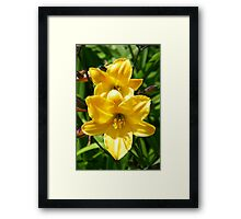 Yellow Lilies Framed Print