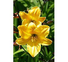 Yellow Lilies Photographic Print