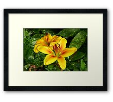Bright Yellow Lilies Framed Print