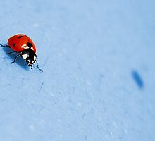Ladybug over the blue by Francesco Malpensi