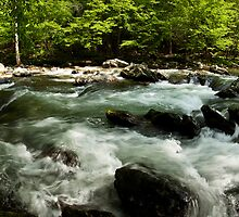 Laurel Creek - Cade's Cove, TN by Stephen Cross Photography