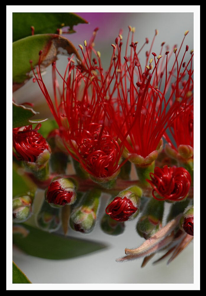 Bottle Brush  by Terry Greenwood