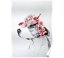 Dog crown Poster
