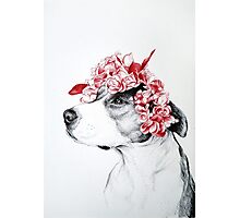 Dog crown Photographic Print