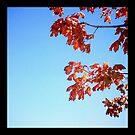 Autumn Blue by Erin  Sadler