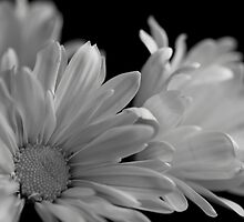 Flowers in Black & White by Lynn  Gibbons