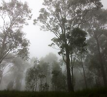Trees in the mist by Nicholas Perry