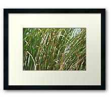 Dragonfly on  dune grass Framed Print