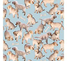 Too Many Puppies Photographic Print