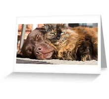 Cats & Dogs Greeting Card