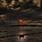 The Lonley dog  by Terry Greenwood
