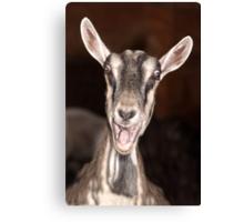 """""""I'm Baaaad"""" - goat has goofy expression Canvas Print"""