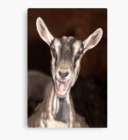 """I'm Baaaad"" - goat has goofy expression Canvas Print"