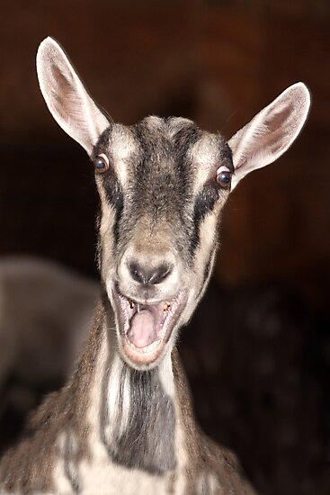 """I'm Baaaad"" - goat has goofy expression by ArtThatSmiles"