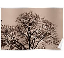 """Late Fall Tree"" Poster"