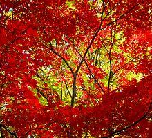 Crimson Window by Sharon Woerner