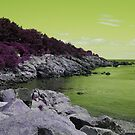 Lime Coastal Maine by Christy  Bruna