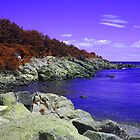 Purple Coastal Maine by Christy  Bruna