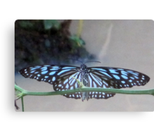 Thai Butterfly card 1 Canvas Print