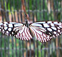Thai Butterfly card 2 by DAdeSimone