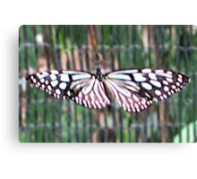 Thai Butterfly card 2 Canvas Print