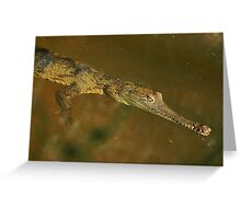 Fresh Water Crocodile Greeting Card