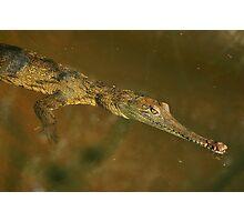 Fresh Water Crocodile Photographic Print