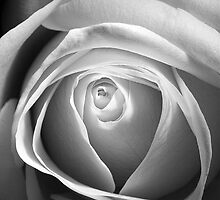 Black and White Rose by Lin-Ann Anantharachagan