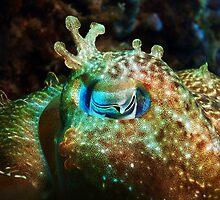 Cuttlefish eye by Whitepointer