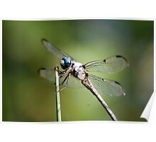 Dragonfly - HDR Poster