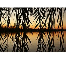 Willow Sunset Photographic Print