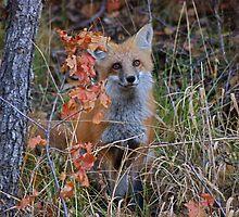 Pretty Baby by FoxSpirit
