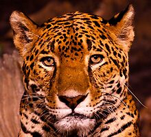 Eye Contact by Tim Denny