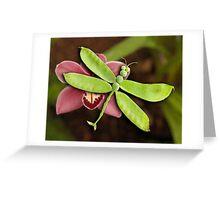 Dragonpea-fly Greeting Card