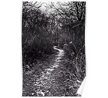 Walking in the paths Poster