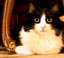 Cat under the table by Cory Bulatovich