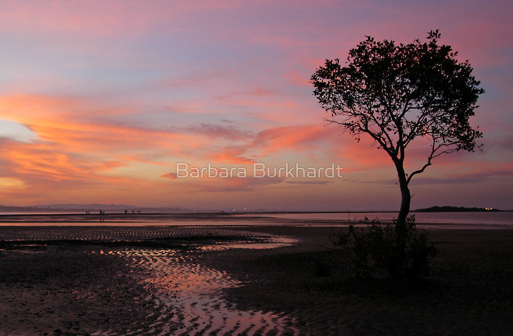Whispers   of   Evening  -  Wellington Point by Barbara Burkhardt