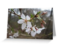 White Flower Close-up Greeting Card