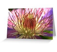 Purple Clematis Close-up Greeting Card