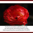 John 3:16 by Catherine Davis