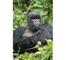 Silverback on Watch Photographic Print