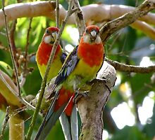 I Love Rosella's! by Gabrielle  Lees