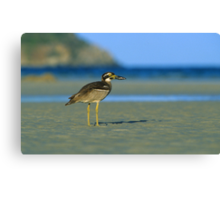 Beach Stone-curlew Canvas Print